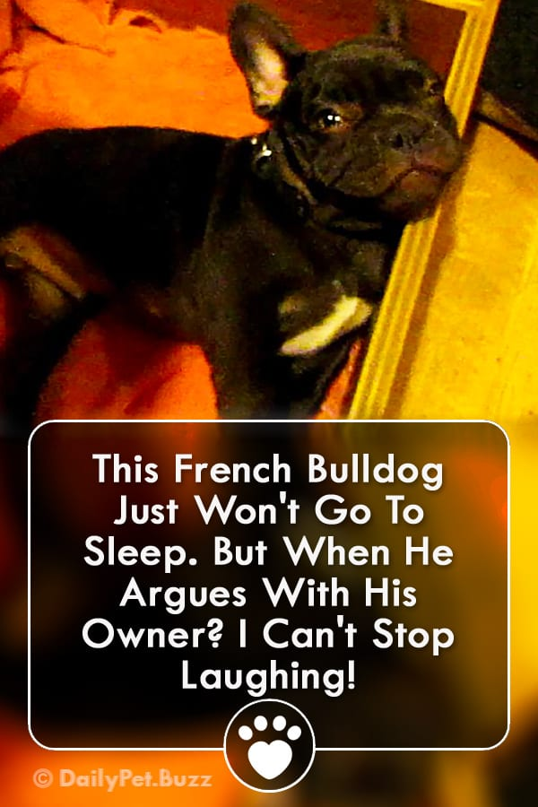 This French Bulldog Just Won\'t Go To Sleep. But When He Argues With His Owner? I Can\'t Stop Laughing!