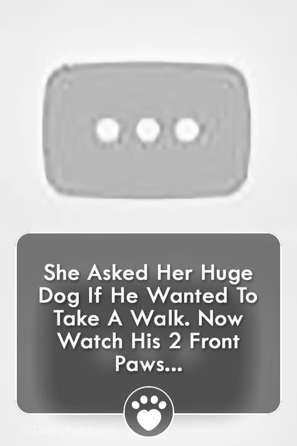 She Asked Her Huge Dog If He Wanted To Take A Walk. Now Watch His 2 Front Paws...