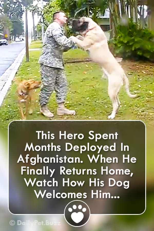 This Hero Spent Months Deployed In Afghanistan. When He Finally Returns Home, Watch How His Dog Welcomes Him...
