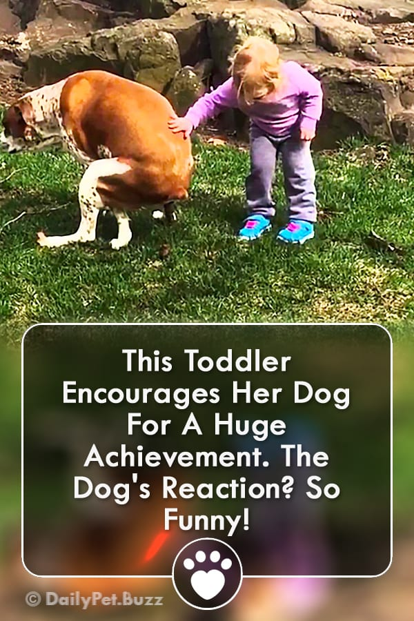 This Toddler Encourages Her Dog For A Huge Achievement. The Dog\'s Reaction? So Funny!