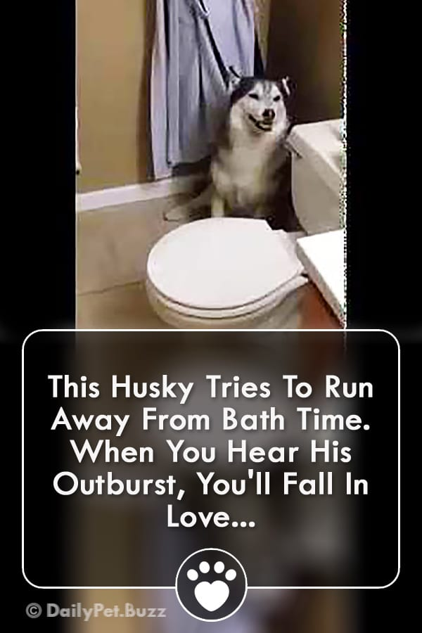 This Husky Tries To Run Away From Bath Time. When You Hear His Outburst, You\'ll Fall In Love...