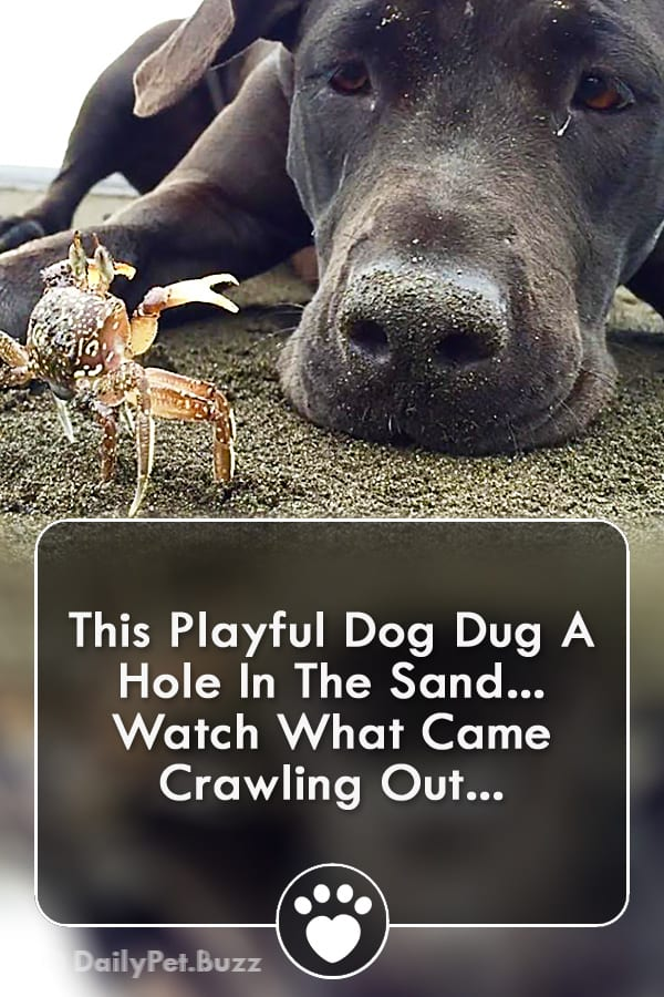 This Playful Dog Dug A Hole In The Sand... Watch What Came Crawling Out...