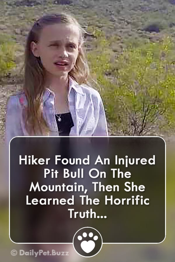 Hiker Found An Injured Pit Bull On The Mountain, Then She Learned The Horrific Truth...