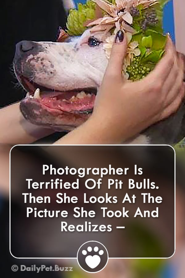 Photographer Is Terrified Of Pit Bulls. Then She Looks At The Picture She Took And Realizes –
