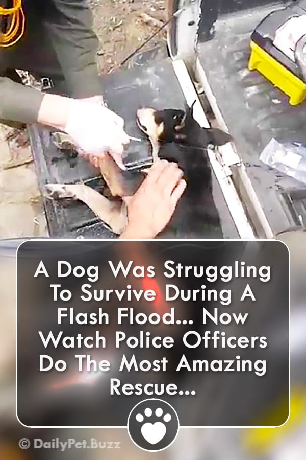 A Dog Was Struggling To Survive During A Flash Flood... Now Watch Police Officers Do The Most Amazing Rescue...