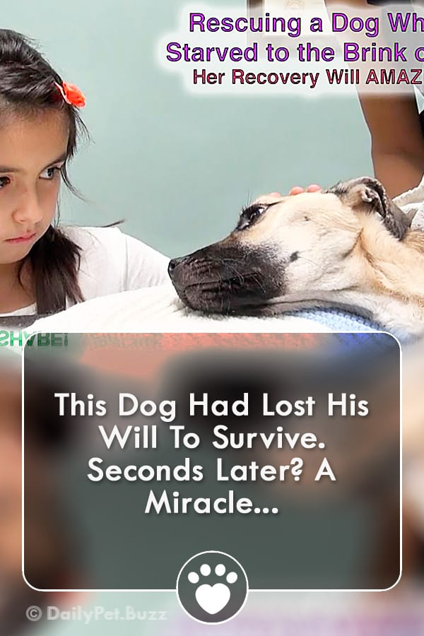 This Dog Had Lost His Will To Survive. Seconds Later? A Miracle...