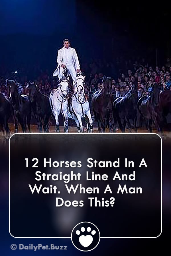 12 Horses Stand In A Straight Line And Wait. When A Man Does This?