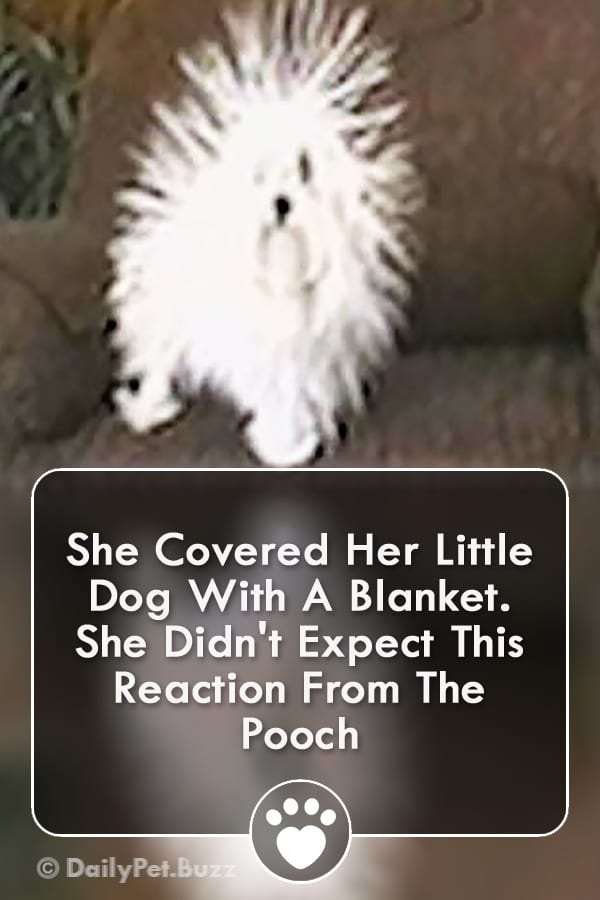 She Covered Her Little Dog With A Blanket. She Didn\'t Expect This Reaction From The Pooch