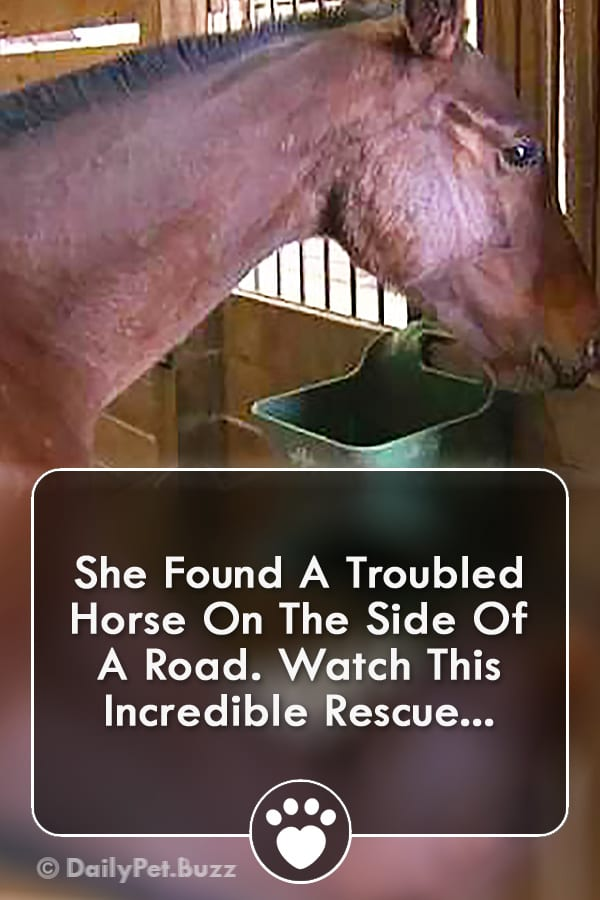 She Found A Troubled Horse On The Side Of A Road. Watch This Incredible Rescue...