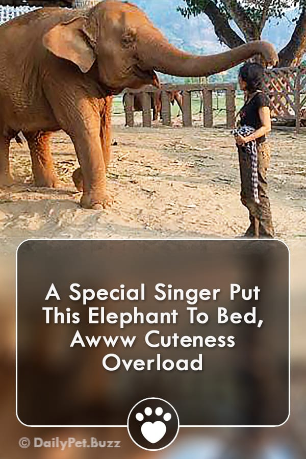 A Special Singer Put This Elephant To Bed, Awww Cuteness Overload