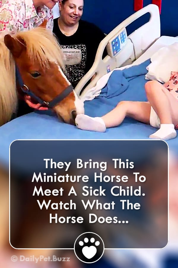 They Bring This Miniature Horse To Meet A Sick Child. Watch What The Horse Does...