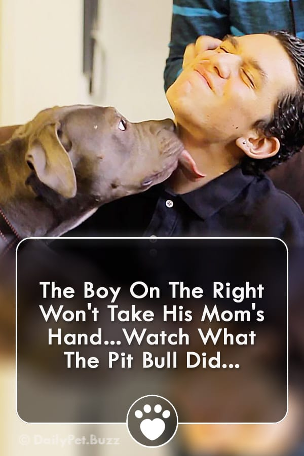 The Boy On The Right Won\'t Take His Mom\'s Hand...Watch What The Pit Bull Did...