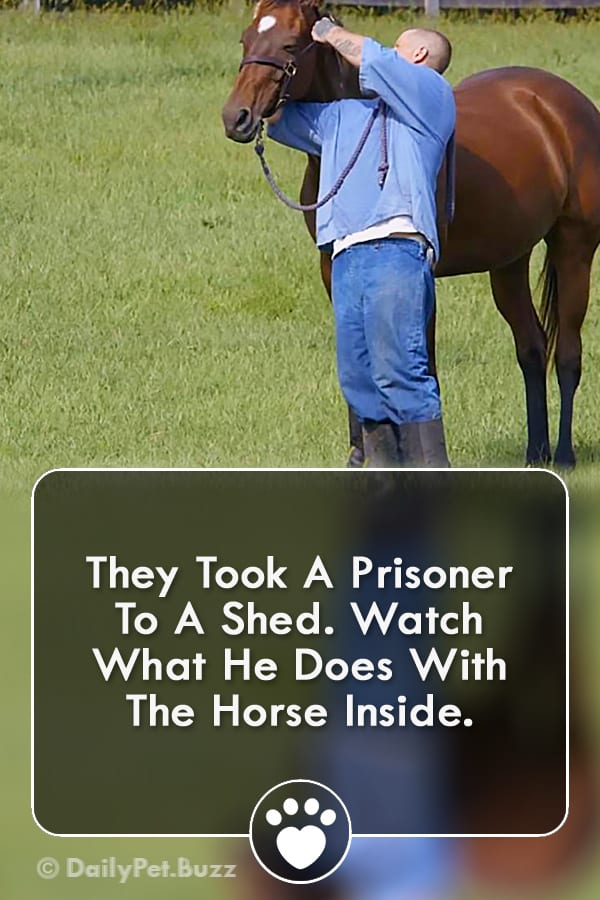 They Took A Prisoner To A Shed. Watch What He Does With The Horse Inside.