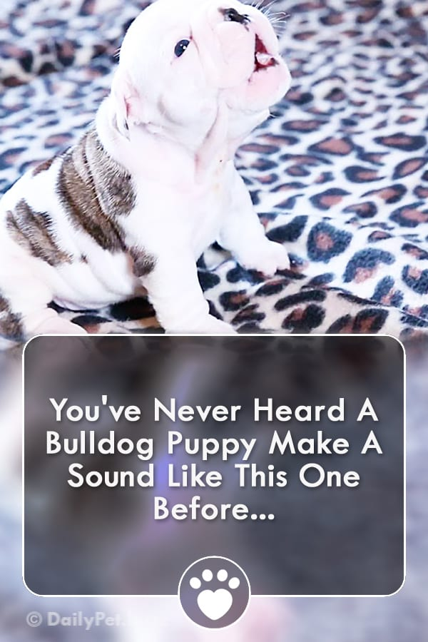 You\'ve Never Heard A Bulldog Puppy Make A Sound Like This One Before...