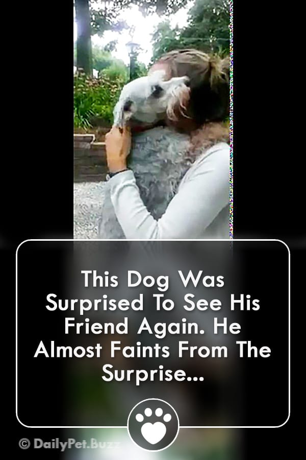 This Dog Was Surprised To See His Friend Again. He Almost Faints From The Surprise...