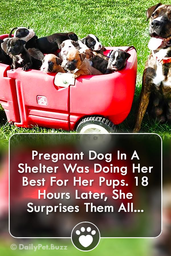 Pregnant Dog In A Shelter Was Doing Her Best For Her Pups. 18 Hours Later, She Surprises Them All...