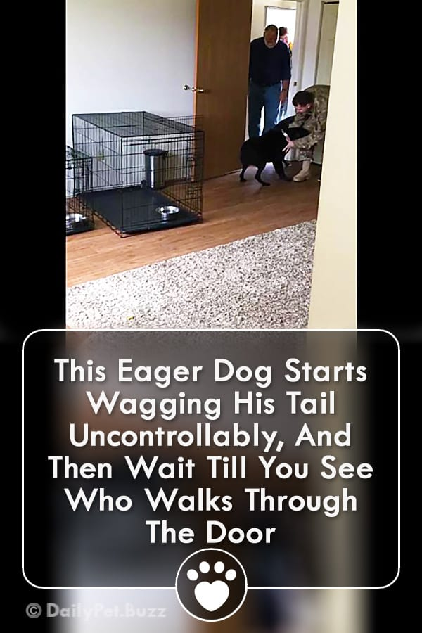 This Eager Dog Starts Wagging His Tail Uncontrollably, And Then Wait Till You See Who Walks Through The Door