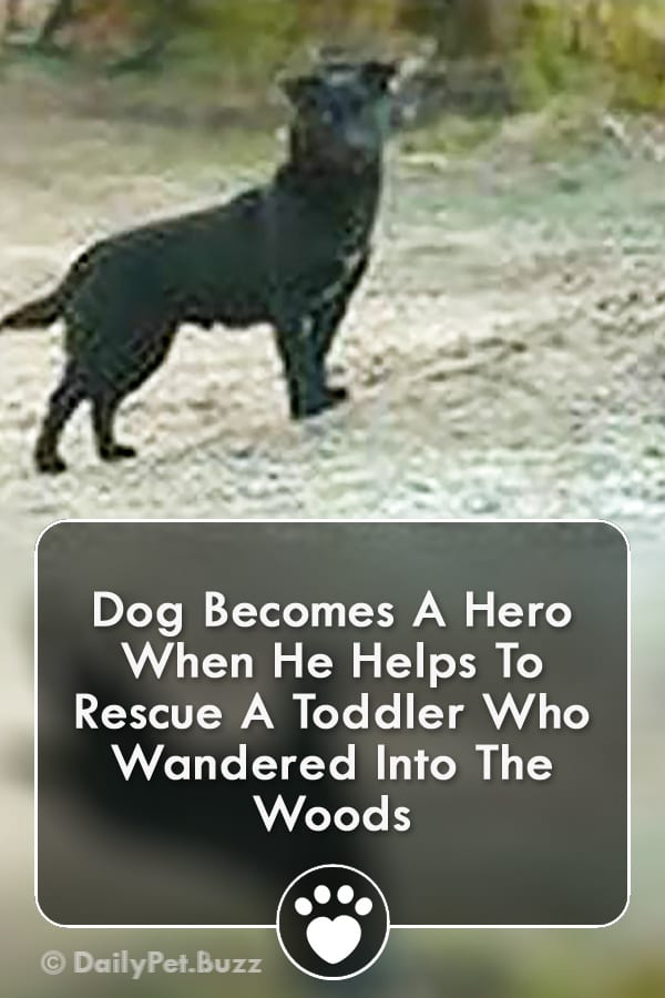 Dog Becomes A Hero When He Helps To Rescue A Toddler Who Wandered Into The Woods