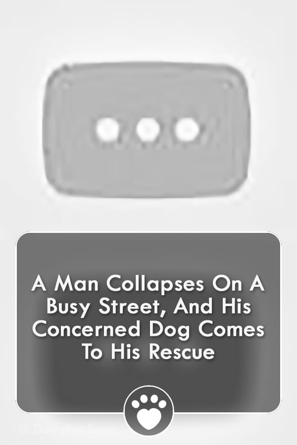 A Man Collapses On A Busy Street, And His Concerned Dog Comes To His Rescue