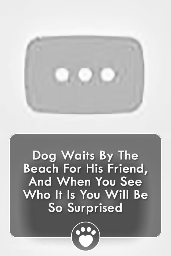 Dog Waits By The Beach For His Friend, And When You See Who It Is You Will Be So Surprised