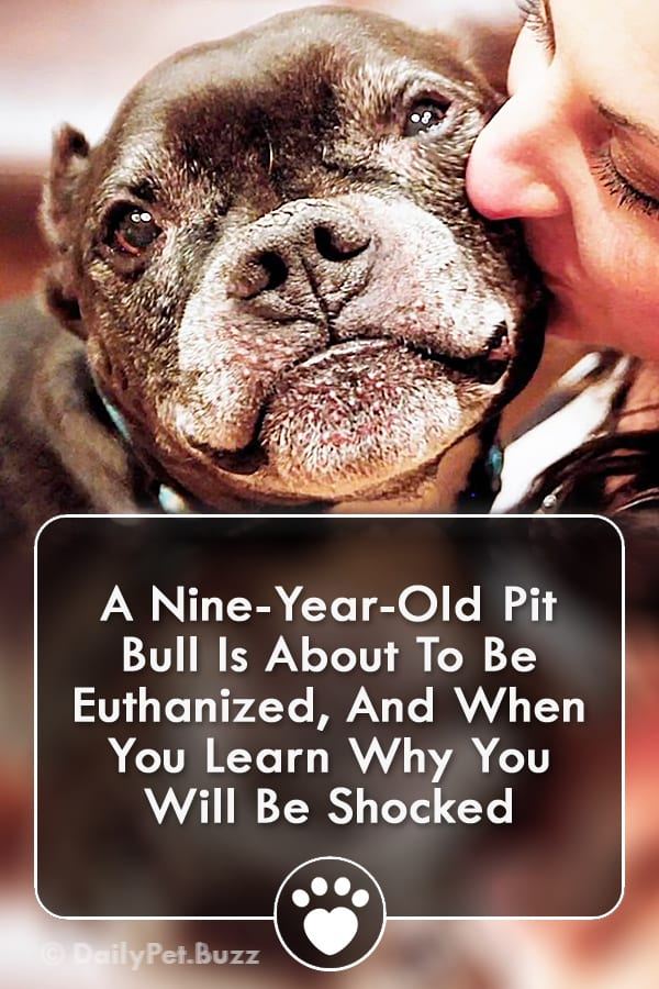 A Nine-Year-Old Pit Bull Is About To Be Euthanized, And When You Learn Why You Will Be Shocked