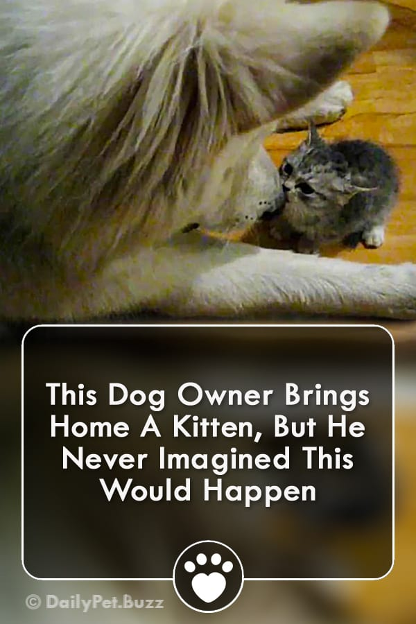 This Dog Owner Brings Home A Kitten, But He Never Imagined This Would Happen