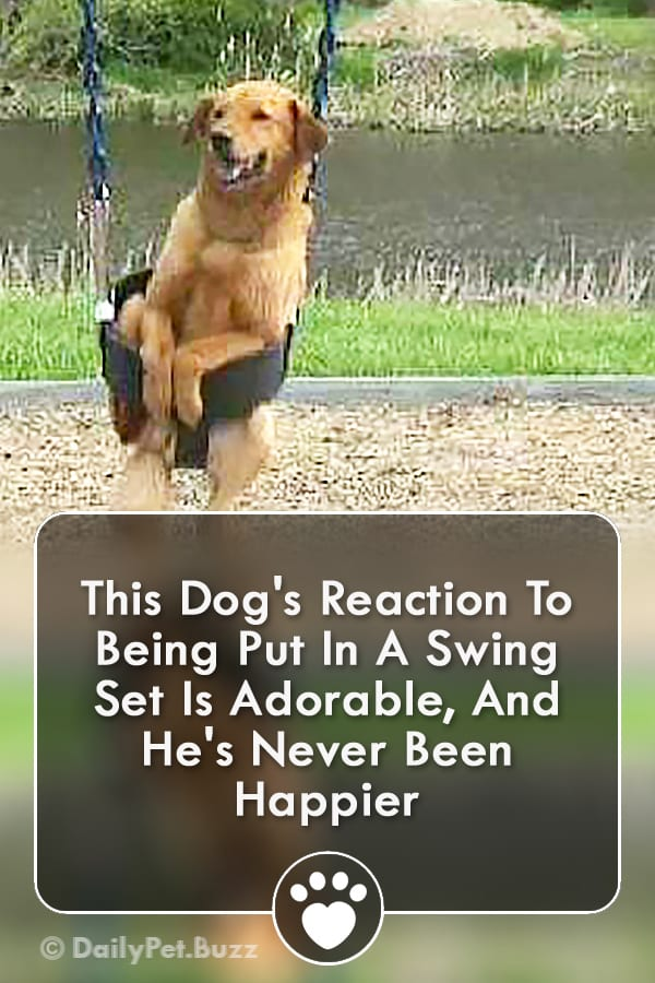 This Dog\'s Reaction To Being Put In A Swing Set Is Adorable, And He\'s Never Been Happier