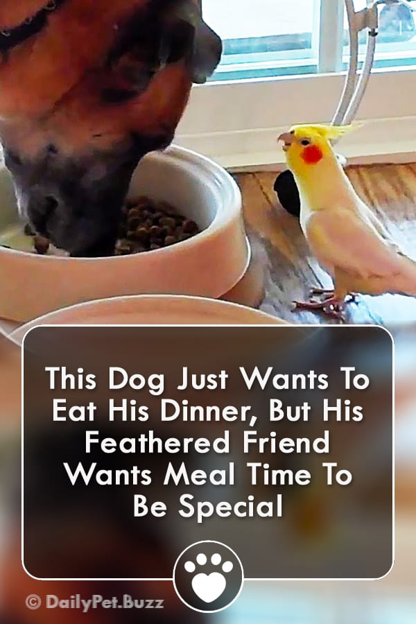 This Dog Just Wants To Eat His Dinner, But His Feathered Friend Wants Meal Time To Be Special