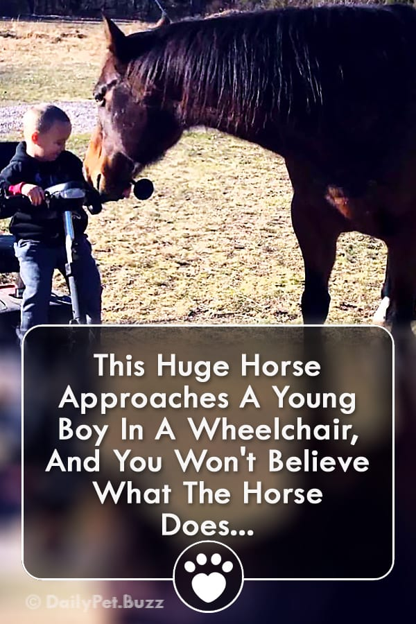 This Huge Horse Approaches A Young Boy In A Wheelchair, And You Won\'t Believe What The Horse Does...