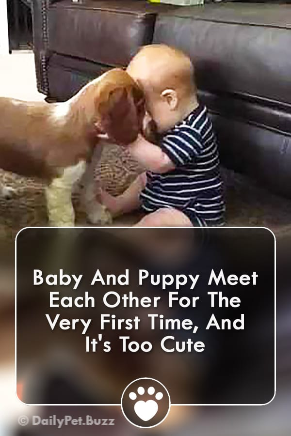 Baby And Puppy Meet Each Other For The Very First Time, And It\'s Too Cute