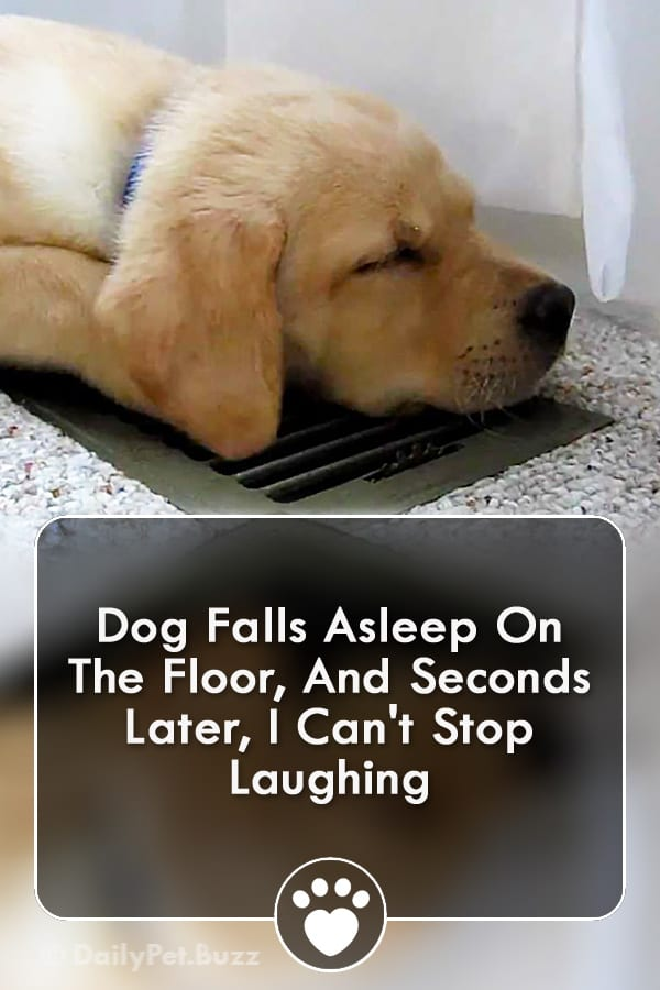 Dog Falls Asleep On The Floor, And Seconds Later, I Can\'t Stop Laughing