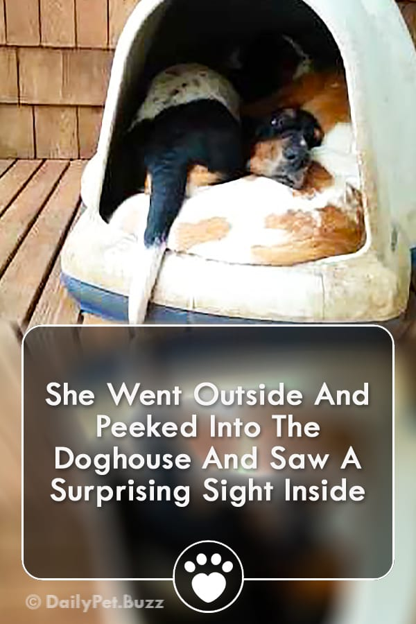 She Went Outside And Peeked Into The Doghouse And Saw A Surprising Sight Inside