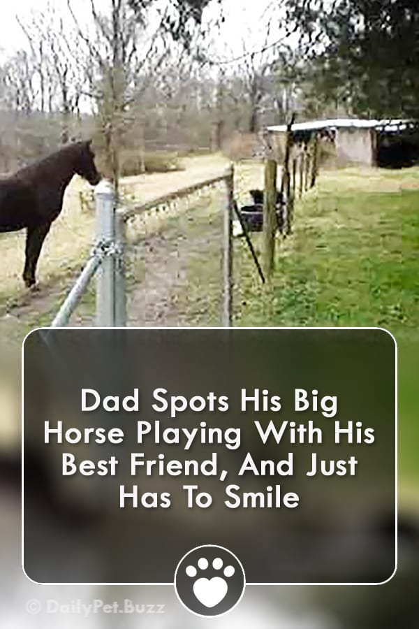 Dad Spots His Big Horse Playing With His Best Friend, And Just Has To Smile