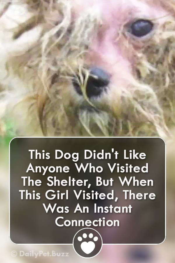 This Dog Didn\'t Like Anyone Who Visited The Shelter, But When This Girl Visited, There Was An Instant Connection