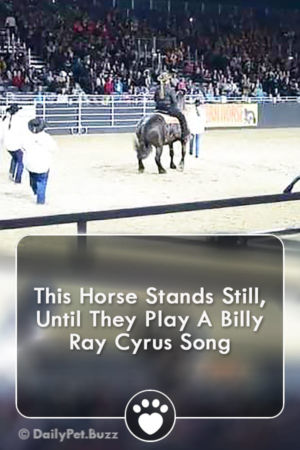 This Horse Stands Still, Until They Play A Billy Ray Cyrus Song