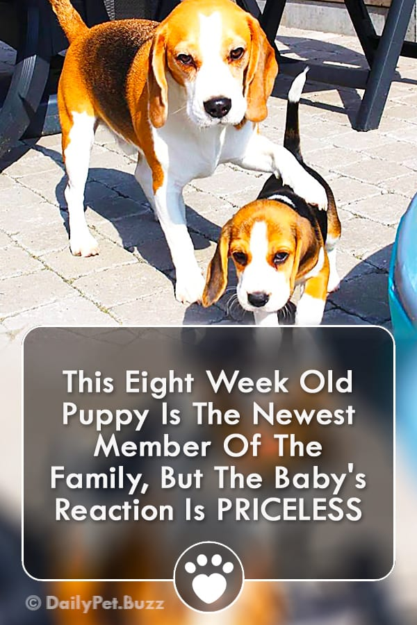 This Eight Week Old Puppy Is The Newest Member Of The Family, But The Baby\'s Reaction Is PRICELESS