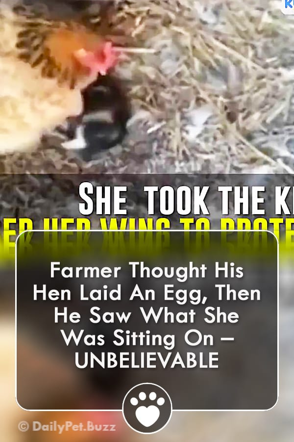 Farmer Thought His Hen Laid An Egg, Then He Saw What She Was Sitting On – UNBELIEVABLE