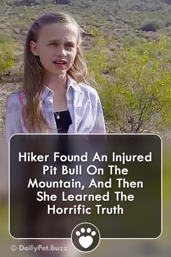 Hiker Found An Injured Pit Bull On The Mountain, And Then She Learned The Horrific Truth