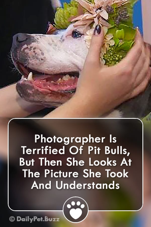 Photographer Is Terrified Of Pit Bulls, But Then She Looks At The Picture She Took And Understands