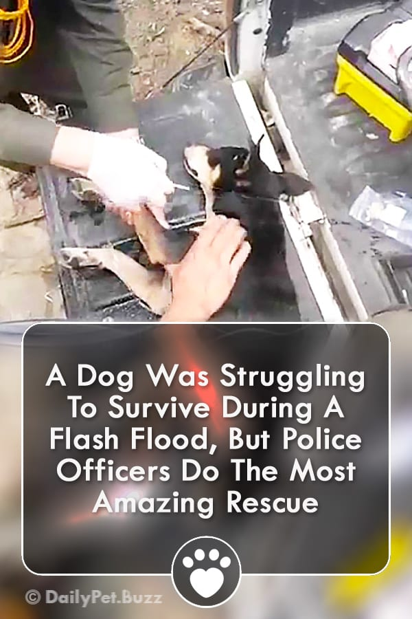 A Dog Was Struggling To Survive During A Flash Flood, But Police Officers Do The Most Amazing Rescue