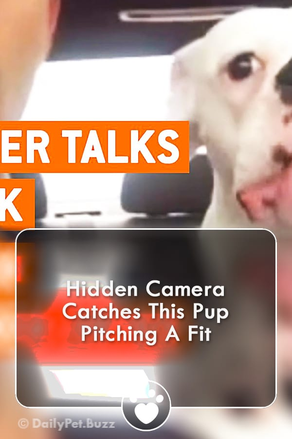 Hidden Camera Catches This Pup Pitching A Fit
