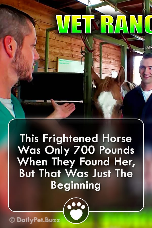 This Frightened Horse Was Only 700 Pounds When They Found Her, But That Was Just The Beginning
