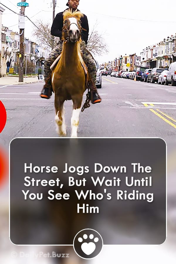 Horse Jogs Down The Street, But Wait Until You See Who\'s Riding Him