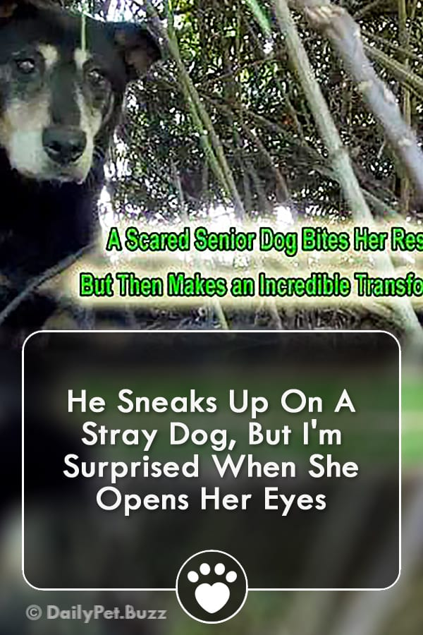 He Sneaks Up On A Stray Dog, But I\'m Surprised When She Opens Her Eyes