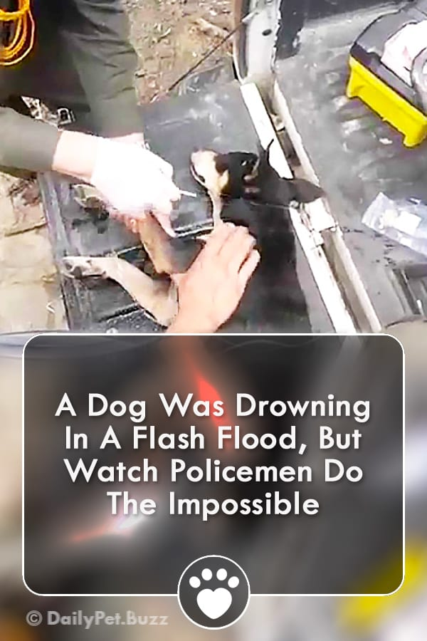 A Dog Was Drowning In A Flash Flood, But Watch Policemen Do The Impossible