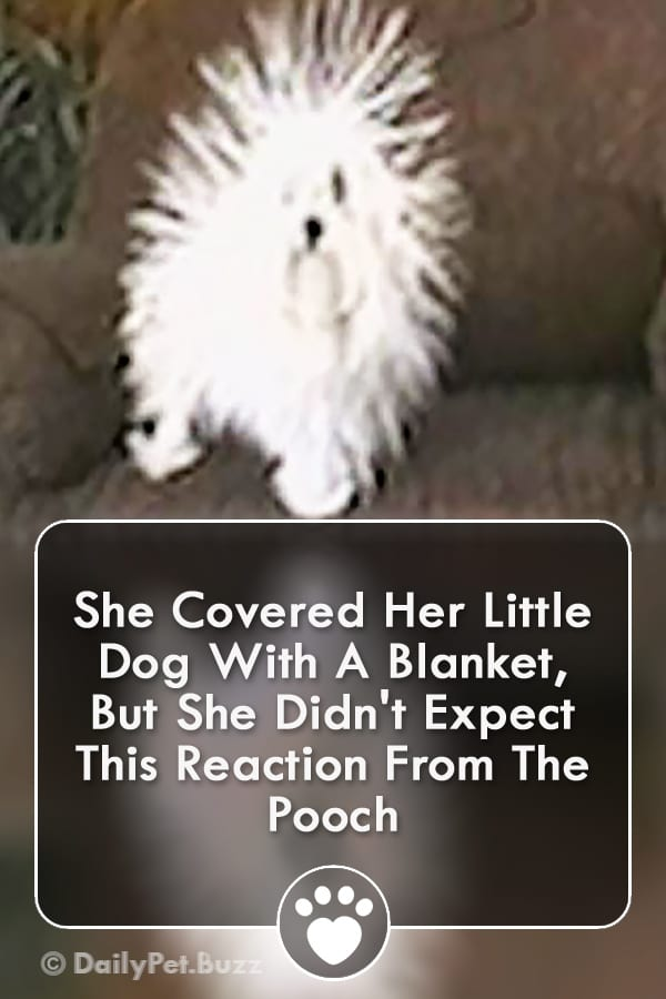 She Covered Her Little Dog With A Blanket, But She Didn\'t Expect This Reaction From The Pooch