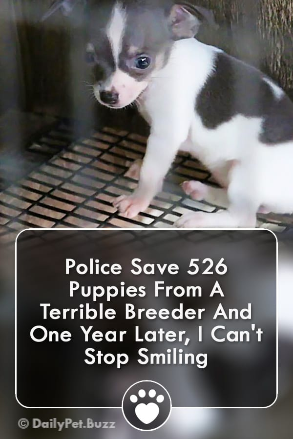Police Save 526 Puppies From A Terrible Breeder And One Year Later, I Can\'t Stop Smiling