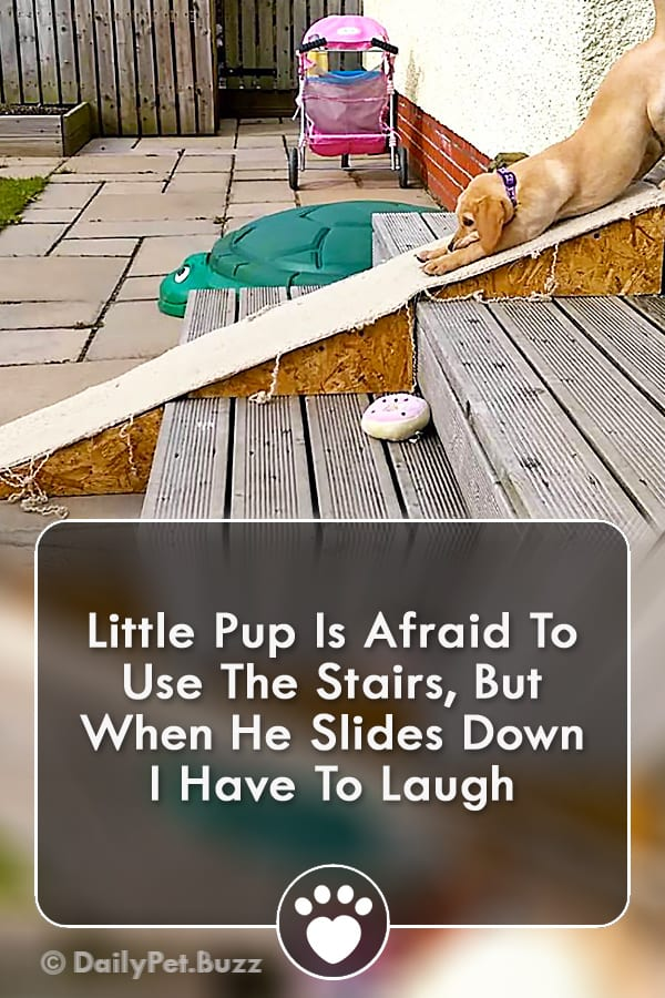 Little Pup Is Afraid To Use The Stairs, But When He Slides Down I Have To Laugh