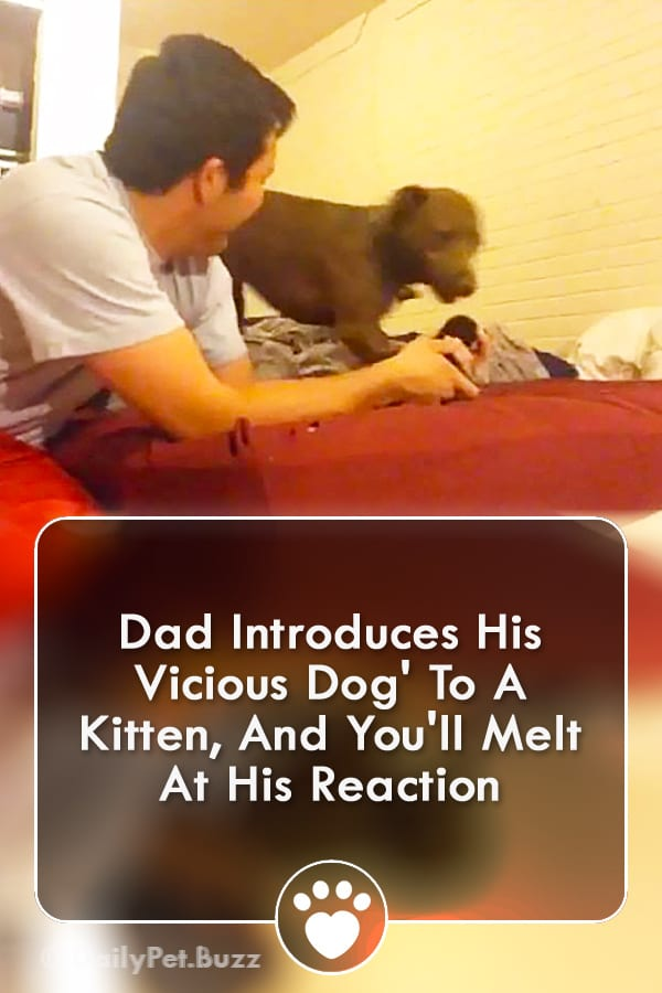 Dad Introduces His Vicious Dog\' To A Kitten, And You\'ll Melt At His Reaction