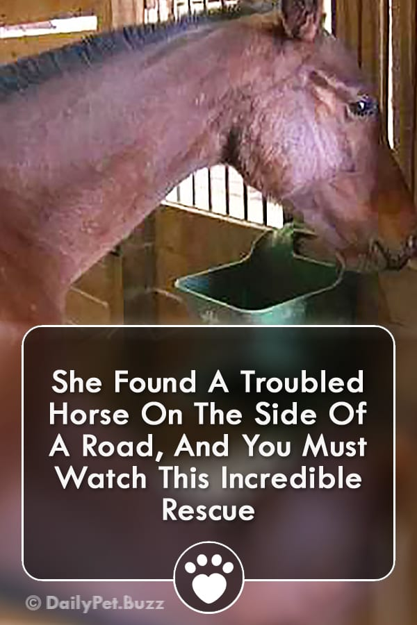 She Found A Troubled Horse On The Side Of A Road, And You Must Watch This Incredible Rescue